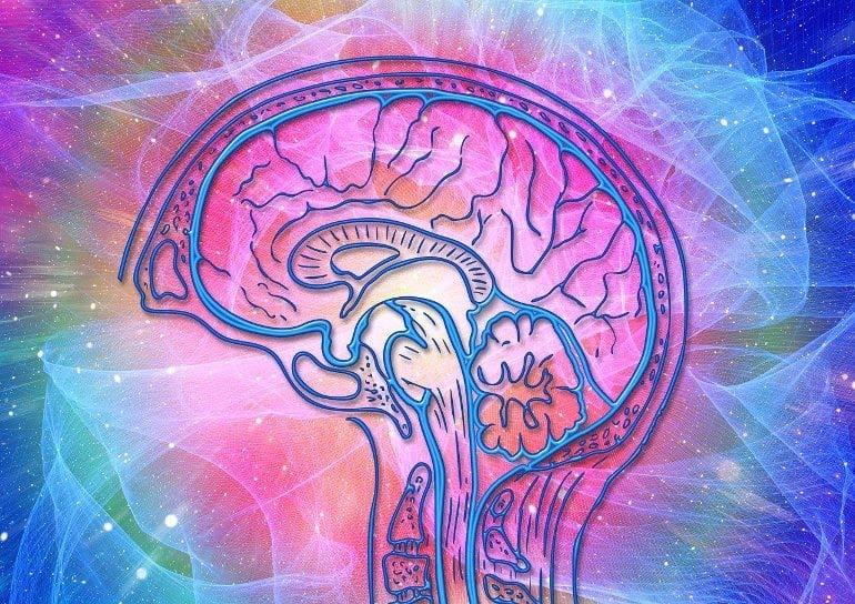 Dit toont een brein